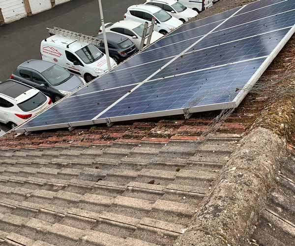 before-solar-bird-protection-Hamilton
